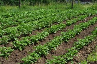 Wir versorgen uns selbst mit Gemüse und Früchten aus eigener Produktion